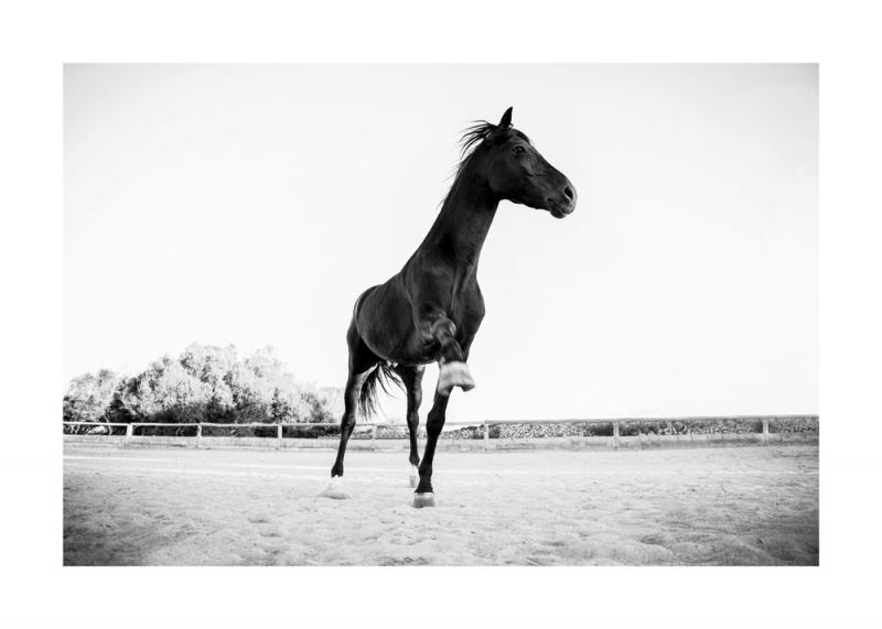Menorquin Horse: #015