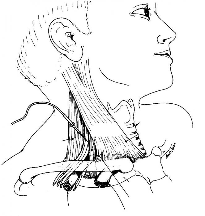 Levine Manuale Di Procedure Di Anestesia Clinica Del