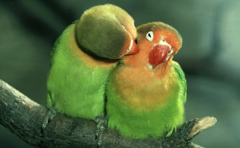 Essere in Amore