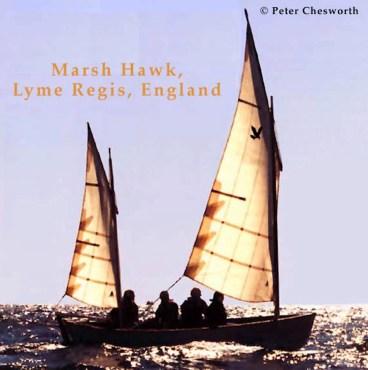 Marsh Hawk, Peter Chezworth Photo