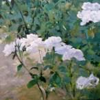 Rosas Blancas I 50x50