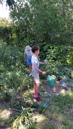"Jimmy and mom picking ""haba"" beans in La Navata, they were delicious!"