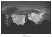 Trees & Cloud