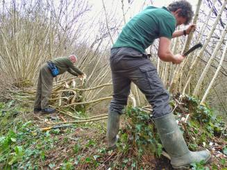 Hedgelaying using the billock