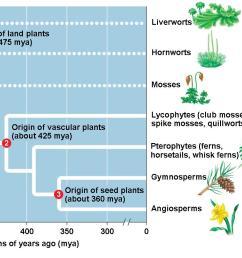 plant evolution diagram schema wiring diagram online human evolution graph plant evolution diagram [ 1402 x 810 Pixel ]
