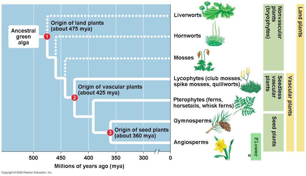 medium resolution of plant evolution diagram schema wiring diagram online human evolution graph plant evolution diagram