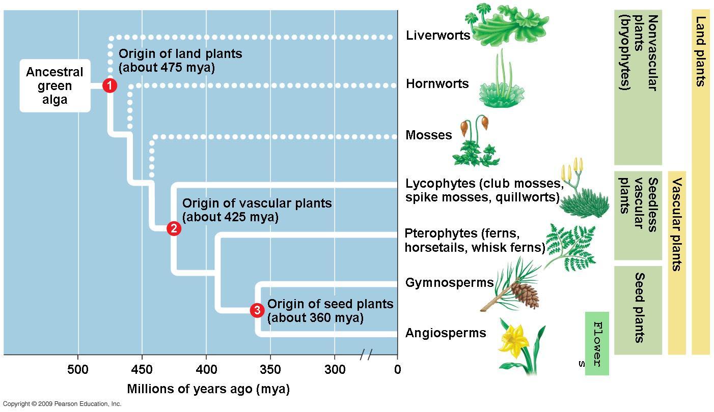 hight resolution of plant evolution diagram schema wiring diagram online human evolution graph plant evolution diagram