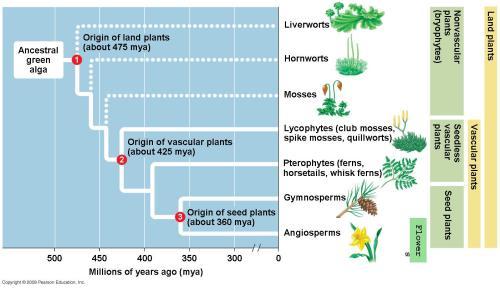 small resolution of plant evolution diagram schema wiring diagram online human evolution graph plant evolution diagram