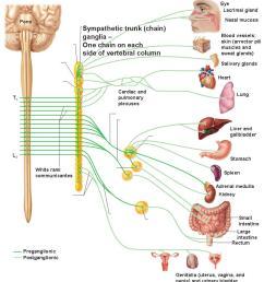 adrenal medulla [ 895 x 968 Pixel ]