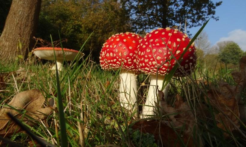 Il meraviglioso mondo dei funghi