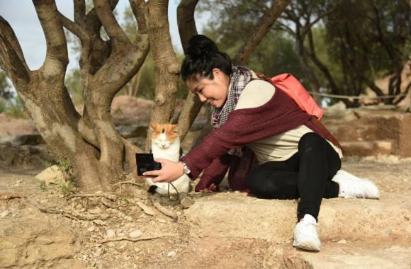 Selfie de touriste avec chat nonchalant