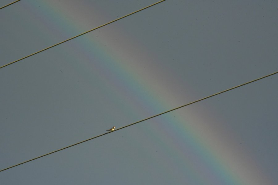 À Cheilly-les-Maranges (Saône-et-Loire), un oiseau semble prendre un instant de pose sur un câble électrique pour admirer un arc-en-ciel.