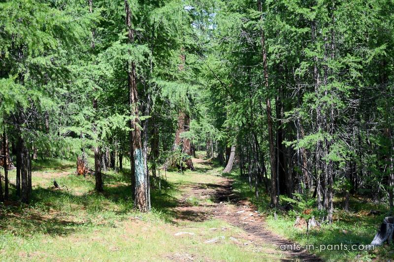 Khövsgö hiking