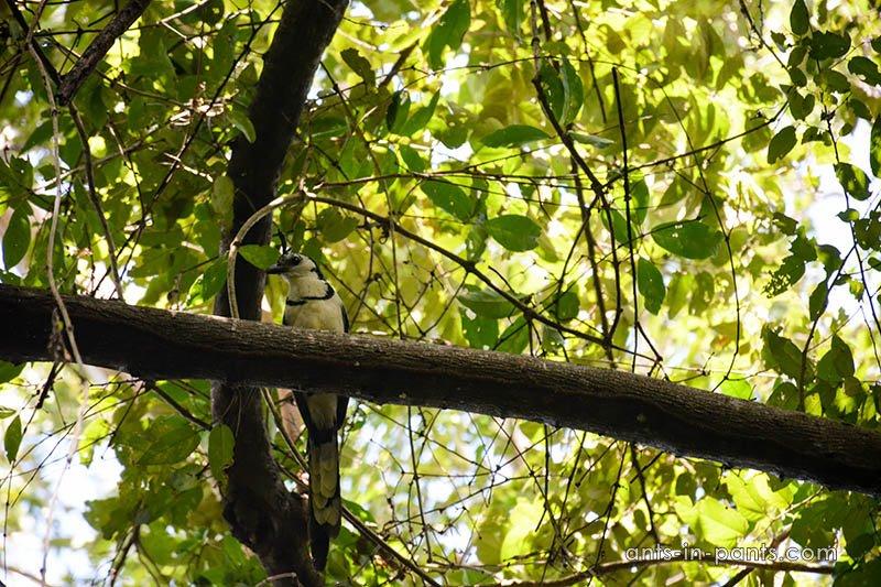 Ometepe birdwatching