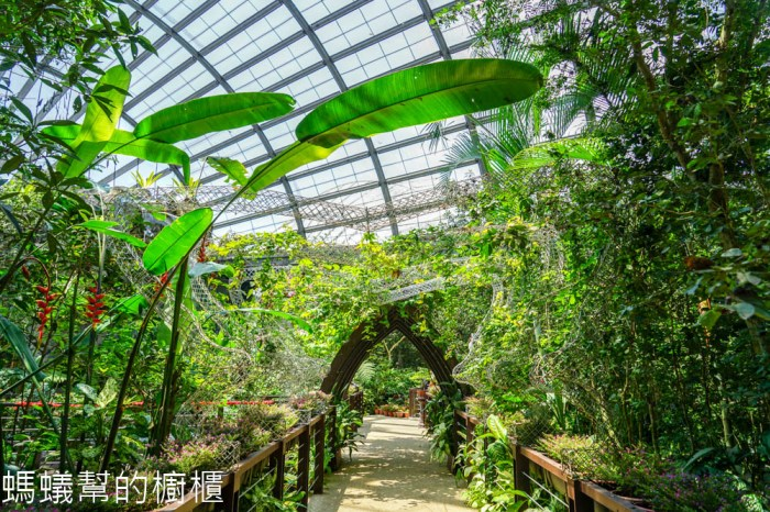 檳城Entopia蟲鳴大地   檳城自然動植物樂園,馬來西亞最大的蝴蝶公園,邂逅翩翩飛舞蝴蝶。