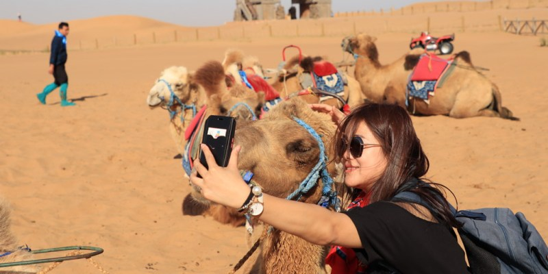 通湖草原 | 寧夏與內蒙古交界處,第一次騎駱駝體驗,第一次走在沙漠原來這麼感動。