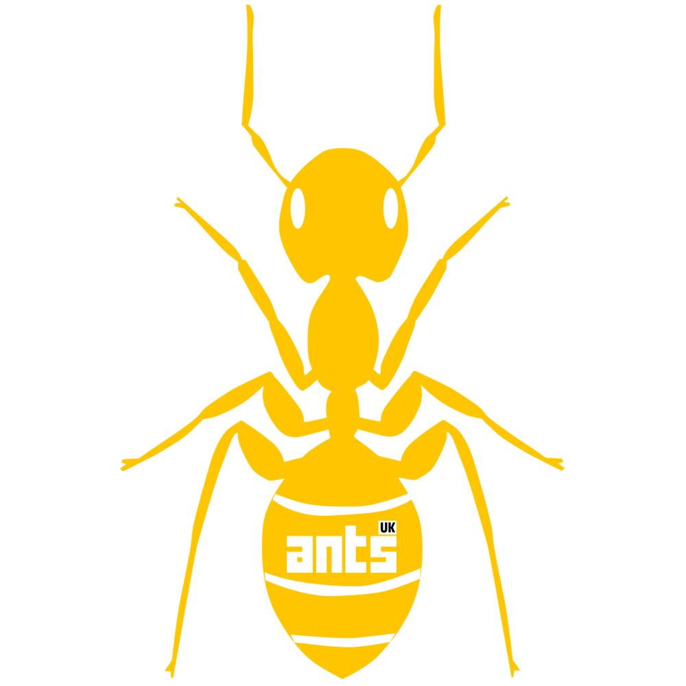 Yellow Meadow Ant Colony Lasius Flavus Ants Uk