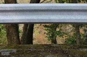 道端のアスファルトとコンクリート壁との隙間に巣がある