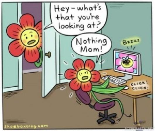 kukasta kukkaan