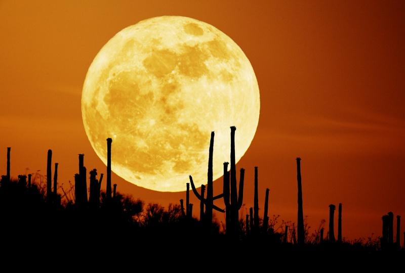 https://i0.wp.com/antwrp.gsfc.nasa.gov/apod/image/0709/saguaroMoon_seip800.jpg