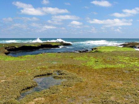 Odpływ oceanu, Australia – Blairgowrie, Wiktoria