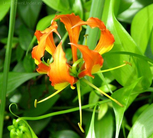 kwiatek. Noosa Heads, Sunshine Coast, Queensland, Australia