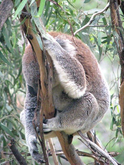 Niekończąca się opowieść: studia w Australii