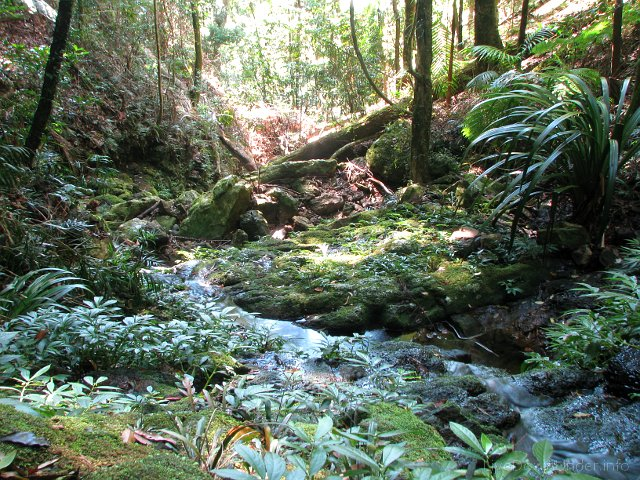 Springbrook National Park, Queensland, Australia