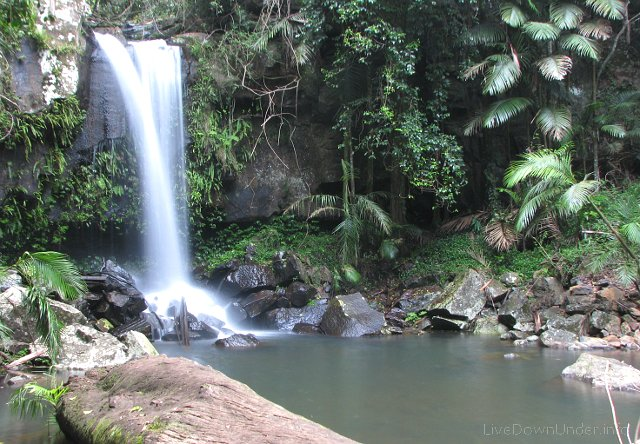 Curtis Falls, Tamborine National Park