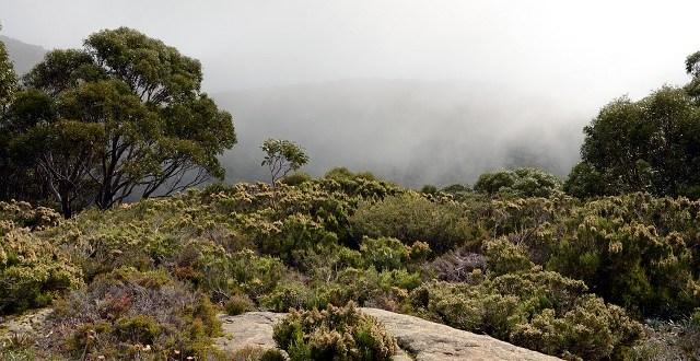 Mount St Gwinear, Baw Baw National Park, Wiktoria, Australia