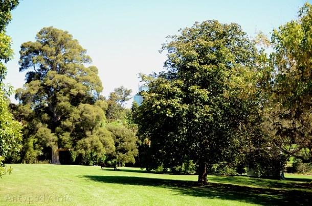 kasztan Paderewskiego, Melbourne, Australia