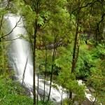 Great Ocean Road: Erskine Falls