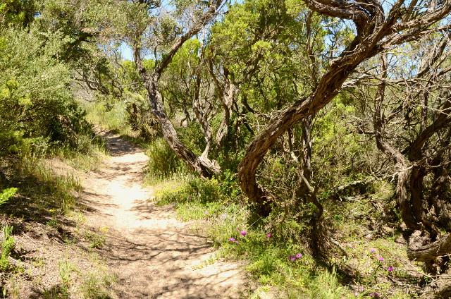 Fingal Beach, Mornington Peninsula, Wiktoria, Australia