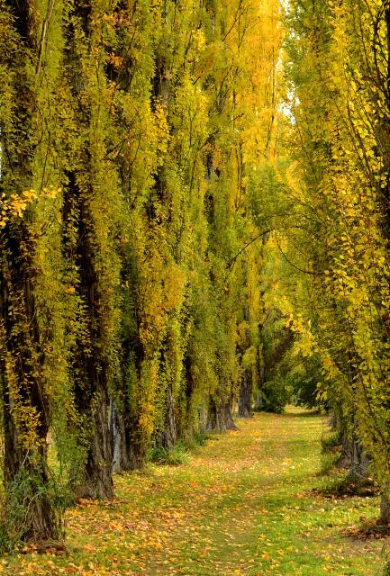 Złota jesień w Australii, Bright