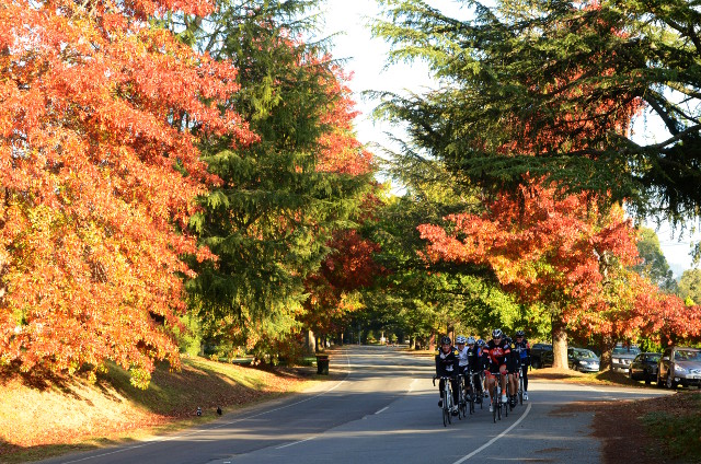 bright_autumn09