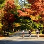 Bright. Część 1 – Kolory Jesieni
