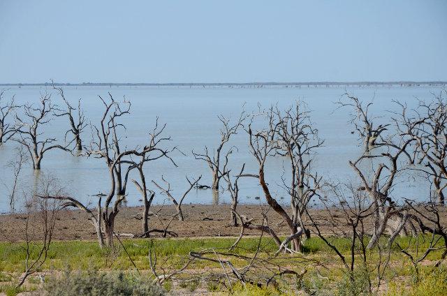 Lake Menindee, Kinchega National Park, NSW, Australia