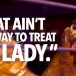 Kurczaki z wolnego wybiegu