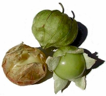 Tomatillos with husks...