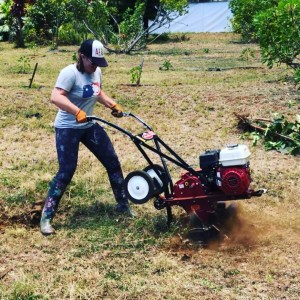 Em using the tiller to prepare a row for planting