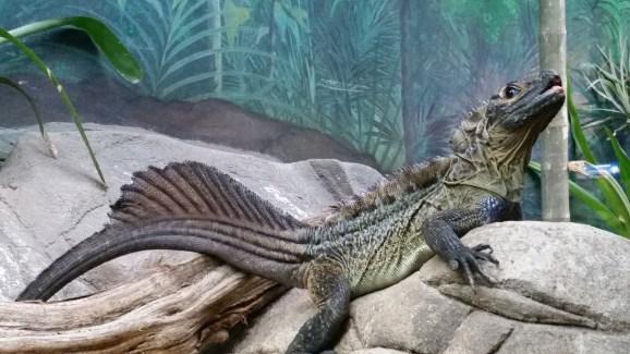 Just a cool lizard livin' life