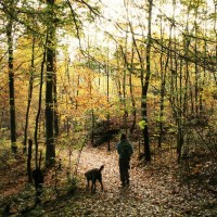 Auf der Suche nach dem goldenen Herbst - Arboretum WeltWald im Harz
