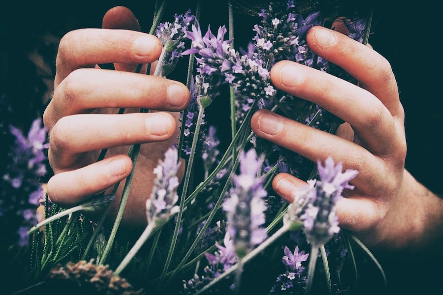 lavender oil benefits for anxiety, essential oils for anxiety, natural anxiety relief, anxiety symptoms, anxiety treatment,