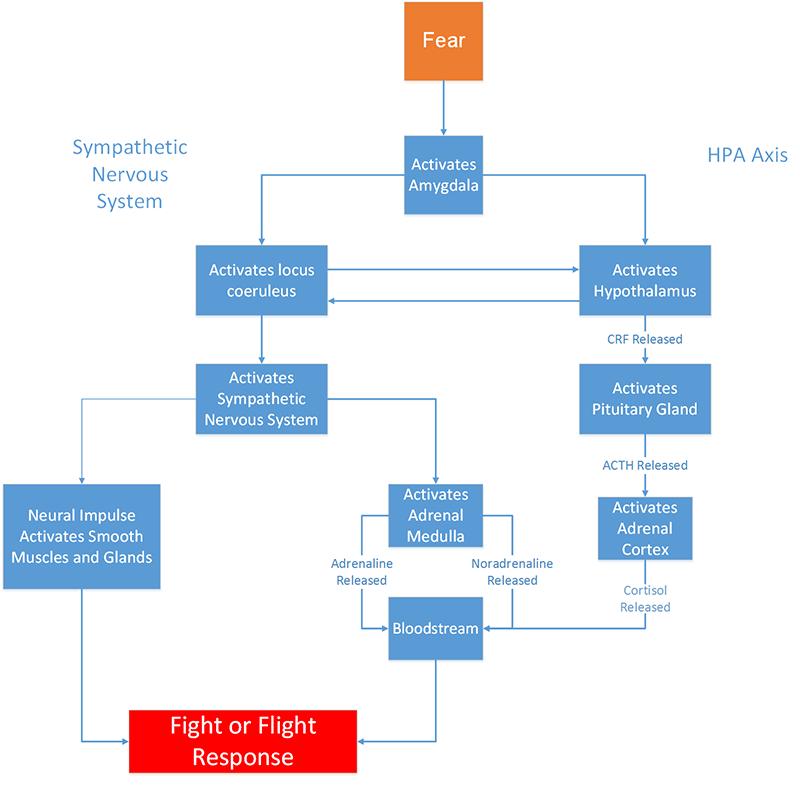 Fear & Fight or Flight Response