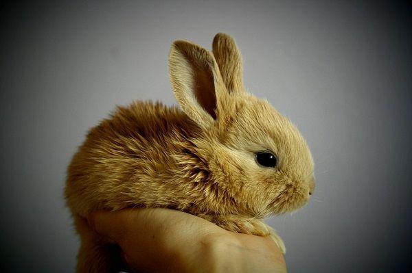 手のひらに乗る小さなウサギ