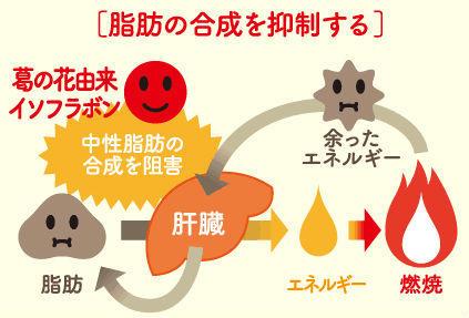 脂肪の合成を抑制