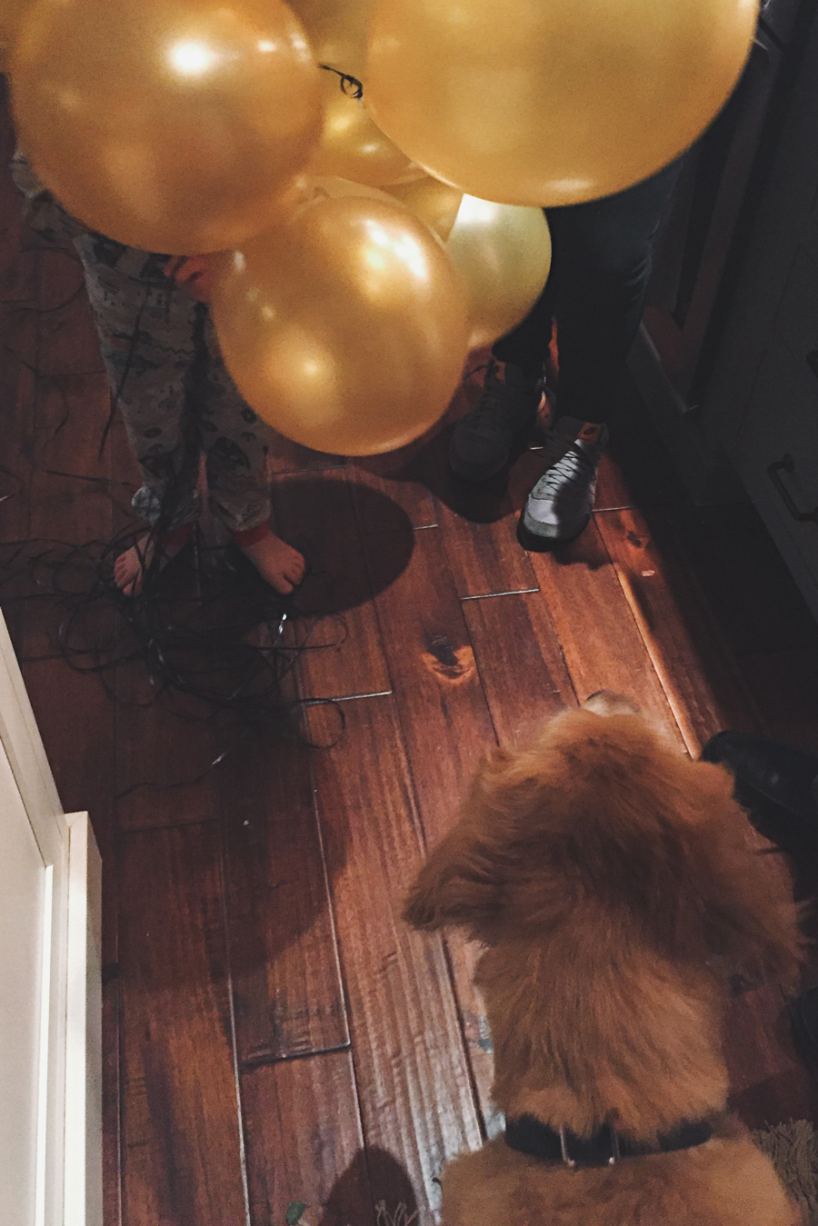 Little boy holding gold balloons for yellow lab.