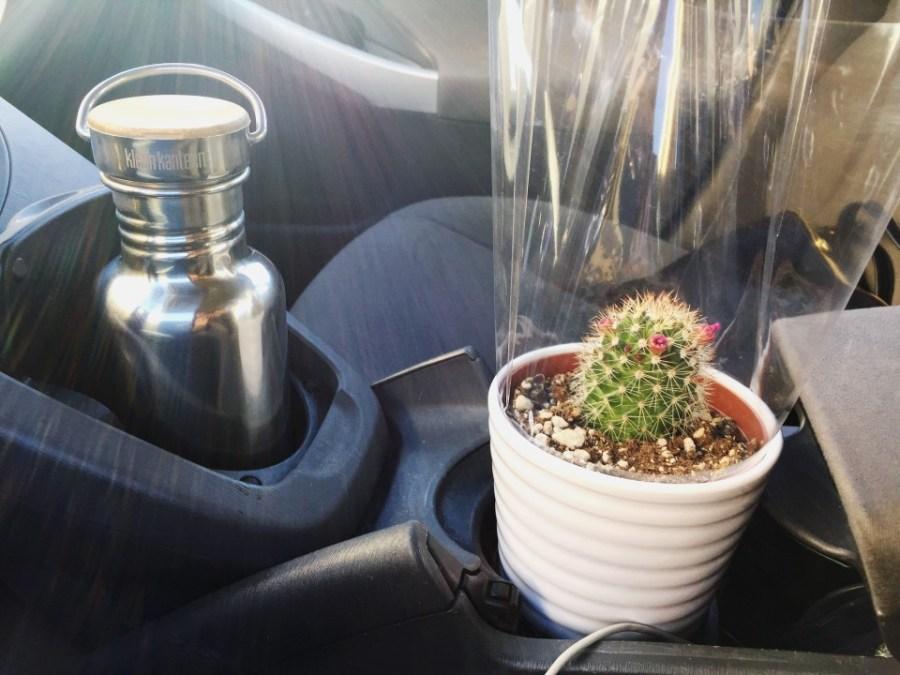cactus_0930
