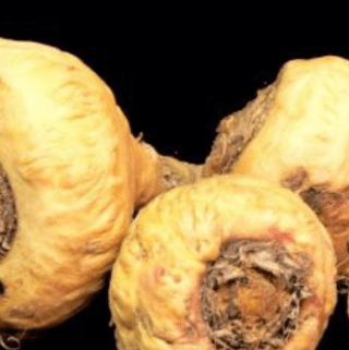 maca for infertility