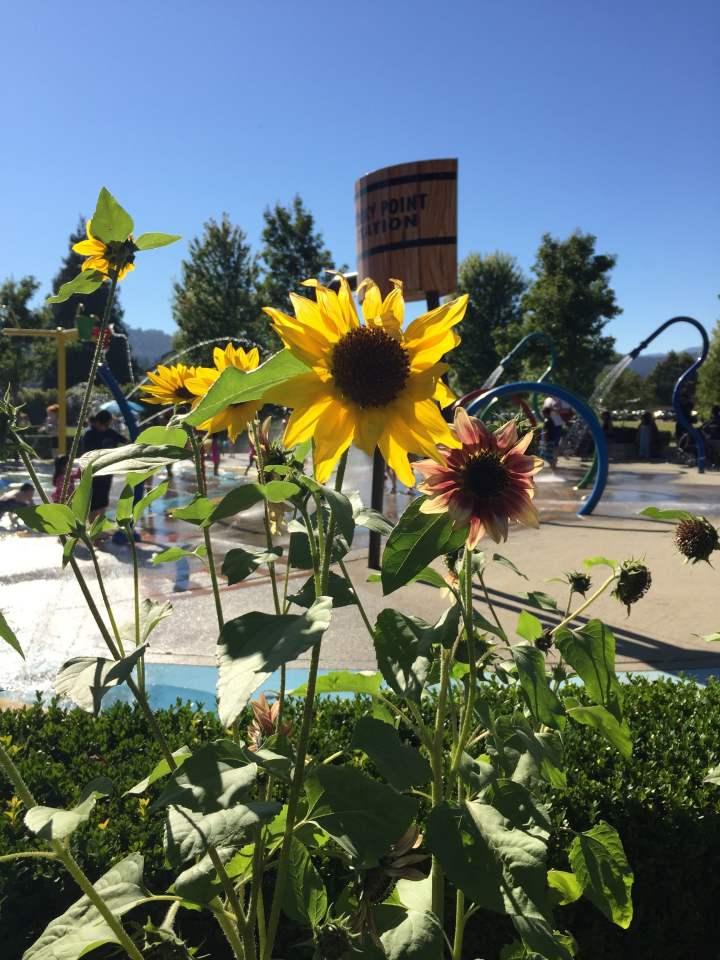 Sunflower Garden Daycare North Vancouver - Garden Design